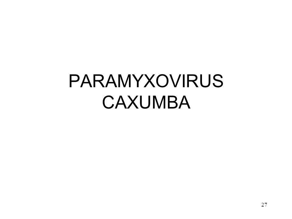 PARAMYXOVIRUS CAXUMBA