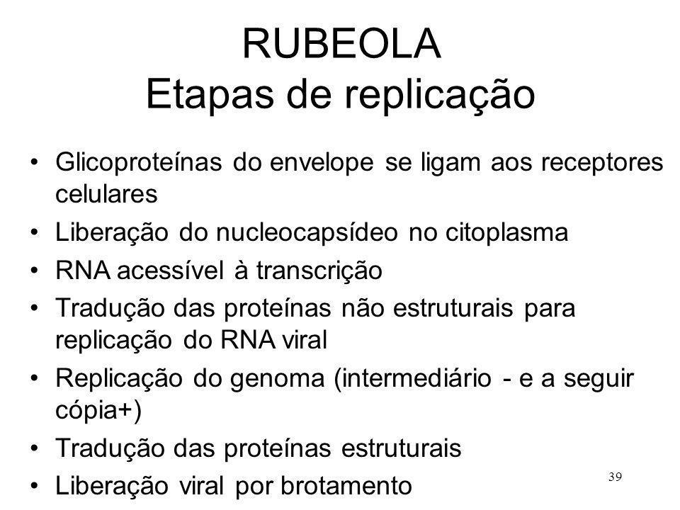 RUBEOLA Etapas de replicação