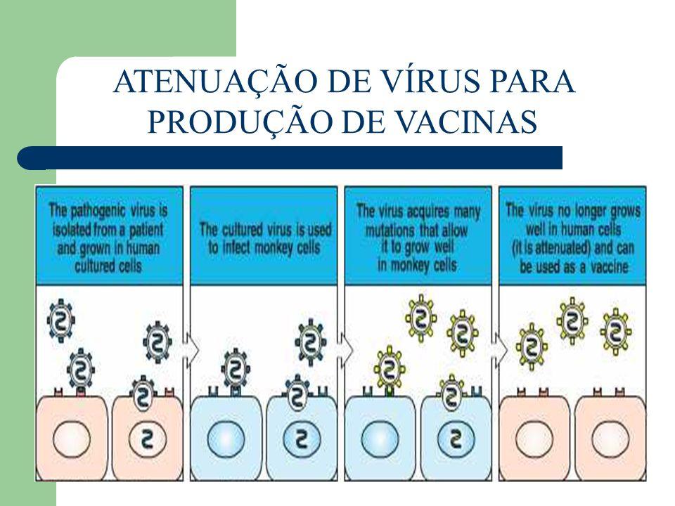 ATENUAÇÃO DE VÍRUS PARA PRODUÇÃO DE VACINAS