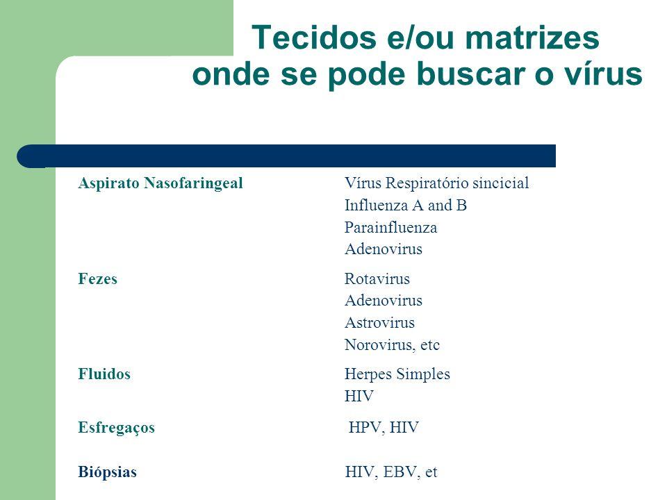 Tecidos e/ou matrizes onde se pode buscar o vírus