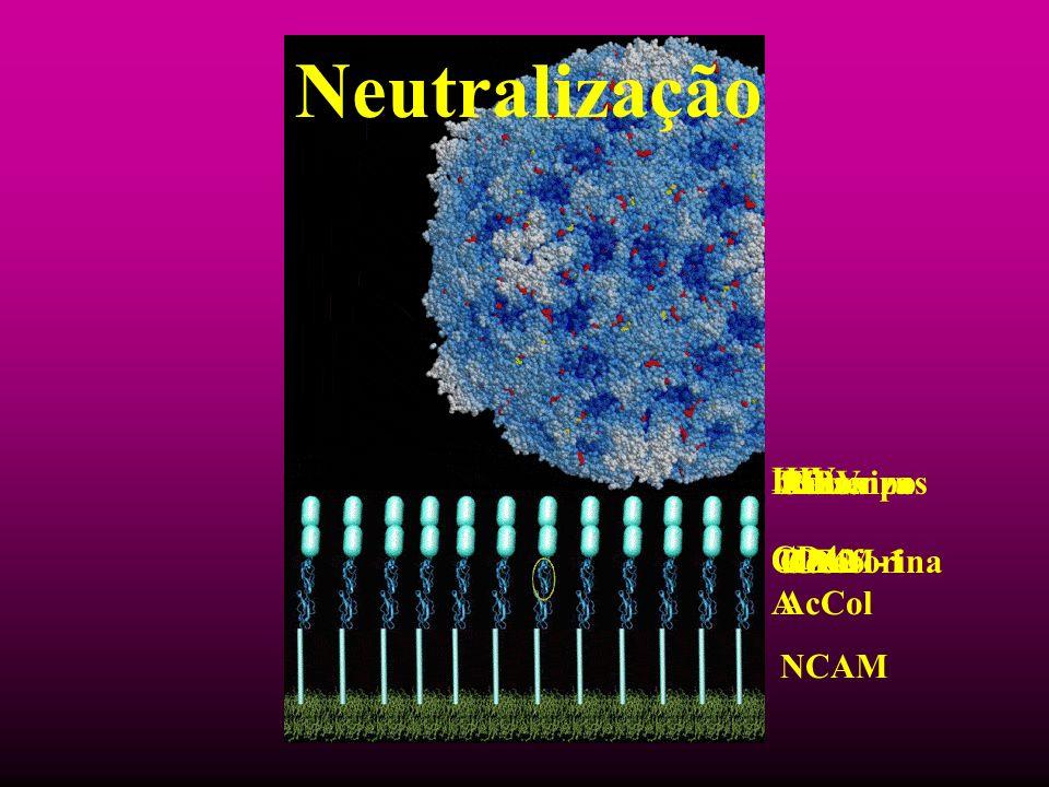 Neutralização HIV CD4 Influenza Glicoforina A Rinovirus ICAM-1 Sarampo