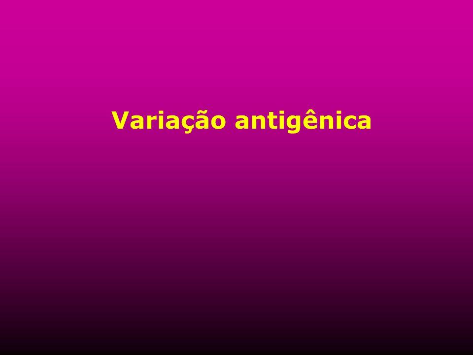 Variação antigênica
