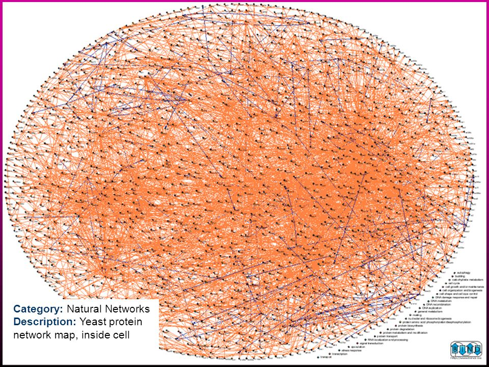 Category: Natural Networks Description: Yeast protein network map, inside cell