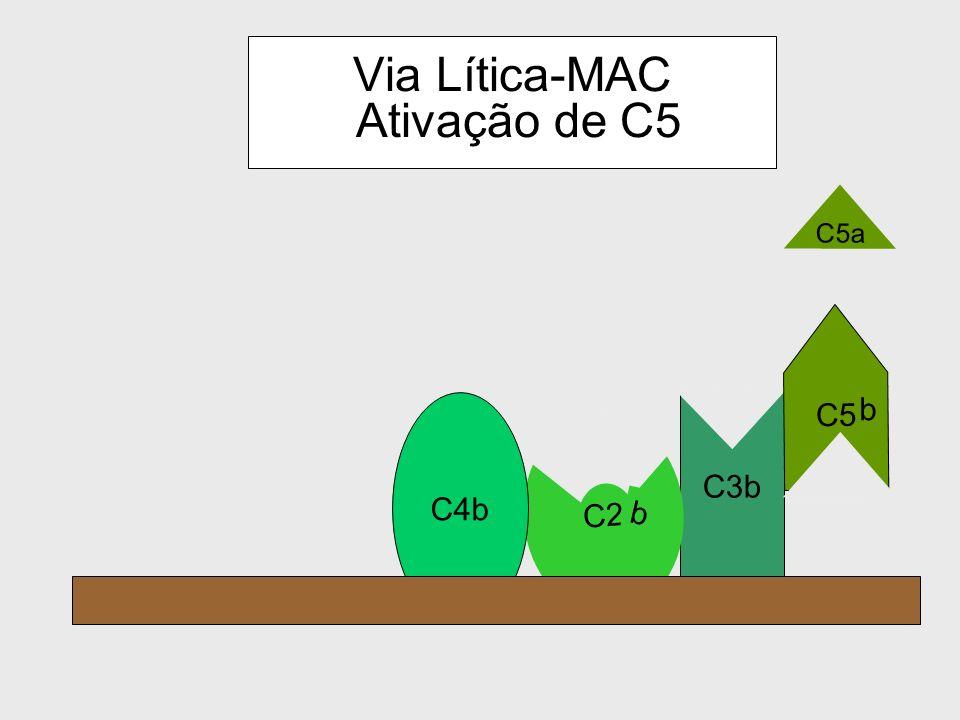 Via Lítica-MAC Ativação de C5