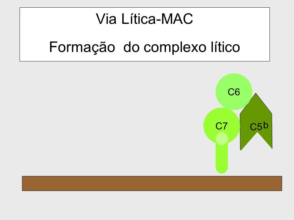 Via Lítica-MAC Formação do complexo lítico