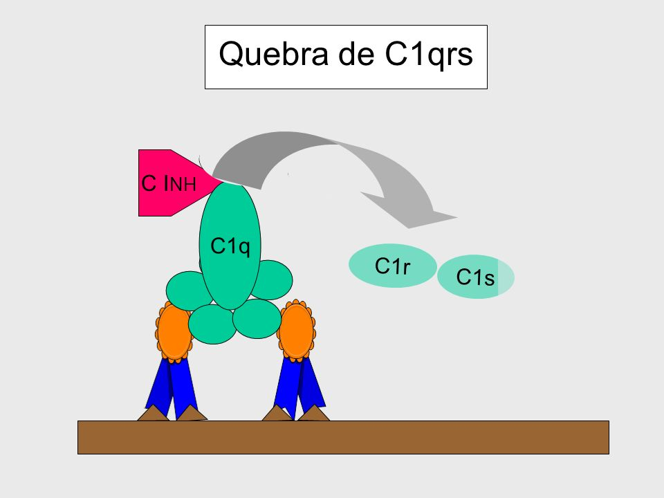 Quebra de C1qrs C1r C1s C1r C1s C1q C INH