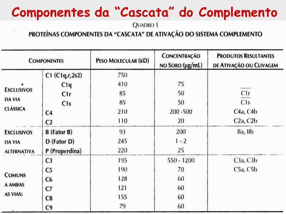 Componentes da Cascata do Complemento