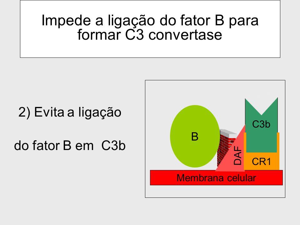 Impede a ligação do fator B para formar C3 convertase
