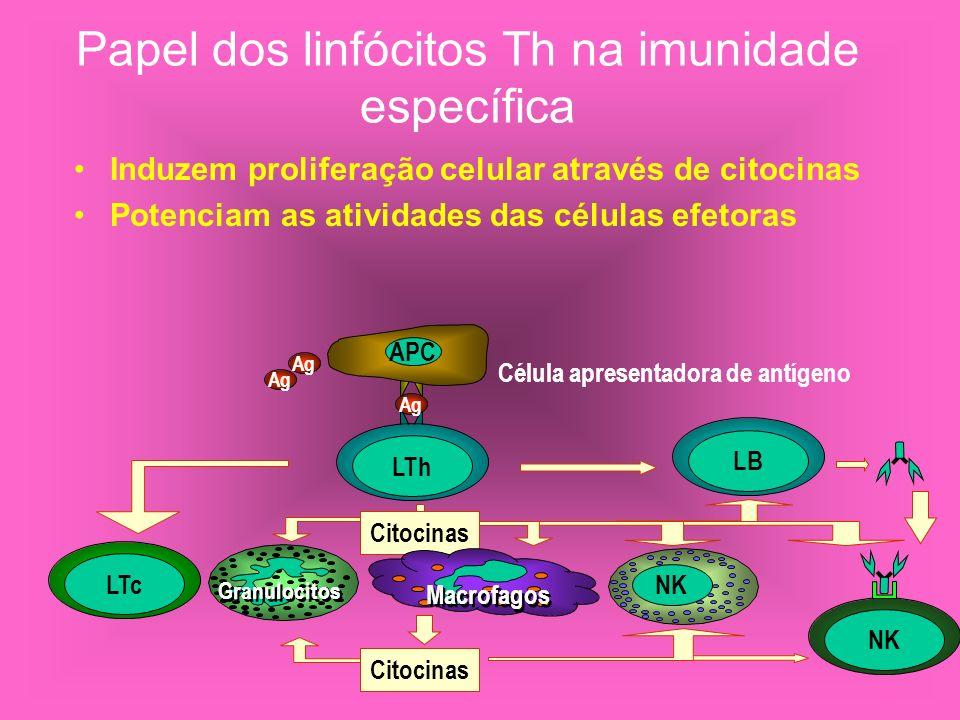 Papel dos linfócitos Th na imunidade específica