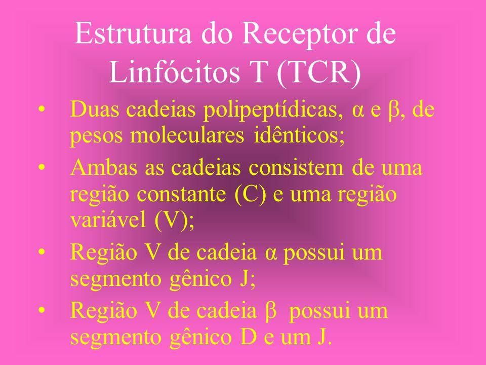 Estrutura do Receptor de Linfócitos T (TCR)