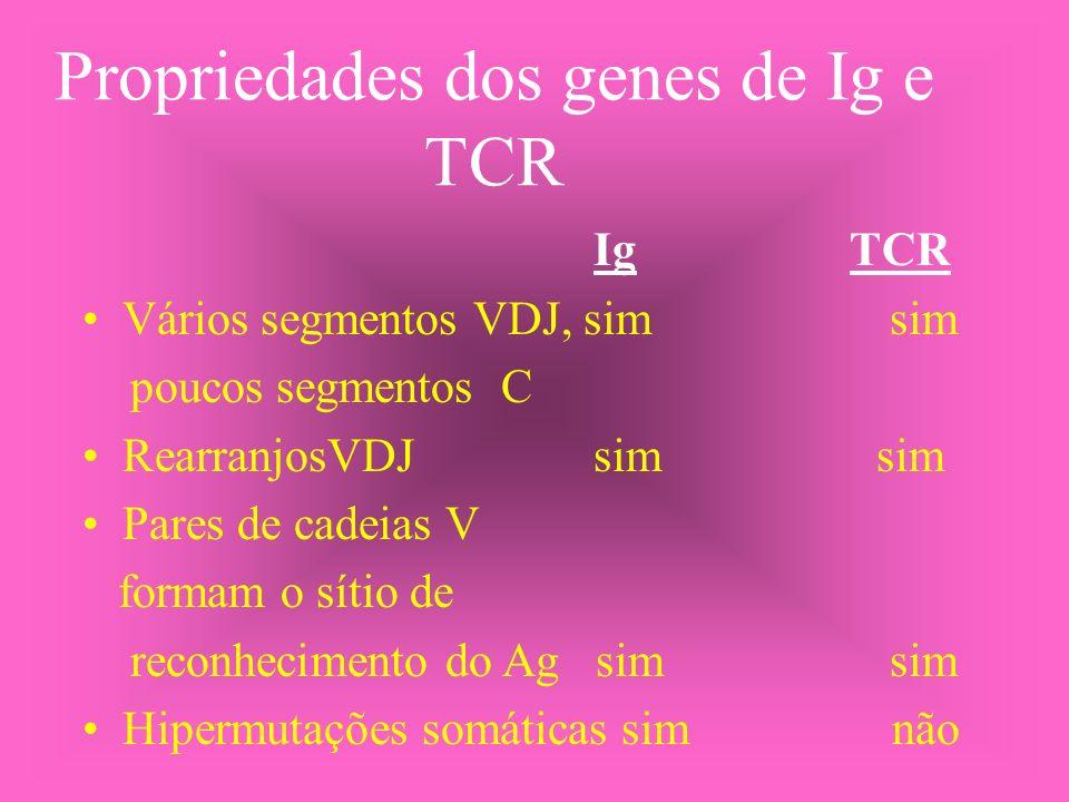 Propriedades dos genes de Ig e TCR