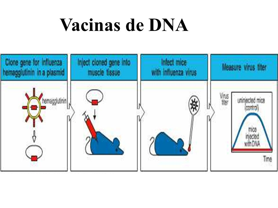 Vacinas de DNA