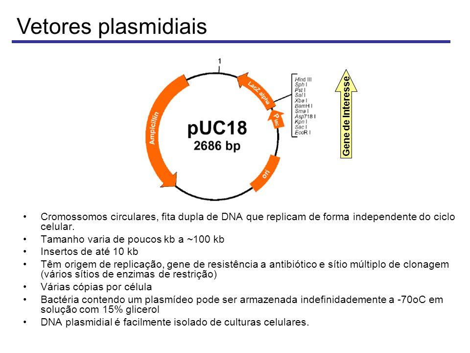 Vetores plasmidiais Gene de interesse. Cromossomos circulares, fita dupla de DNA que replicam de forma independente do ciclo celular.