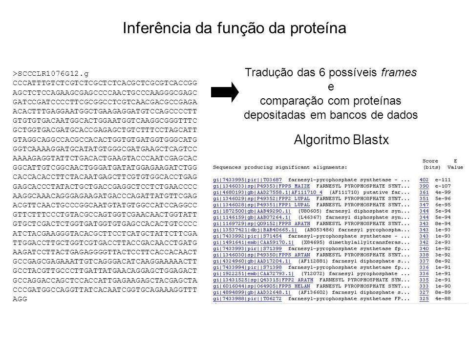 Inferência da função da proteína