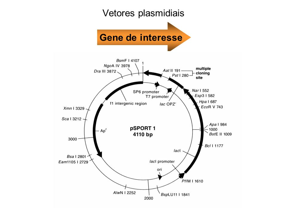 Vetores plasmidiais Gene de interesse