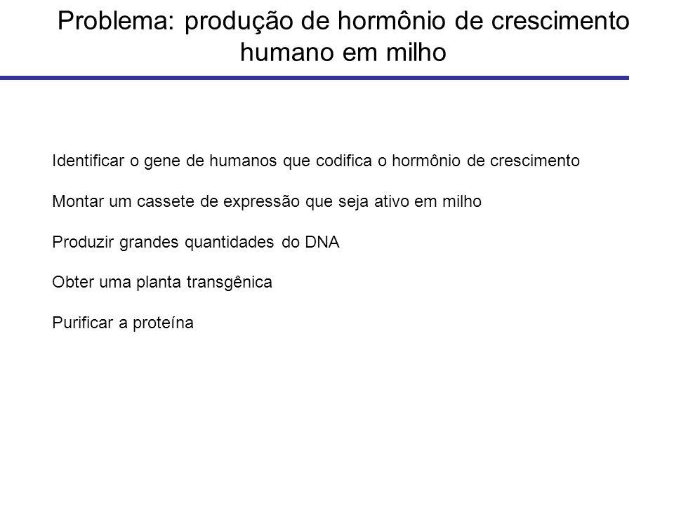 Problema: produção de hormônio de crescimento humano em milho