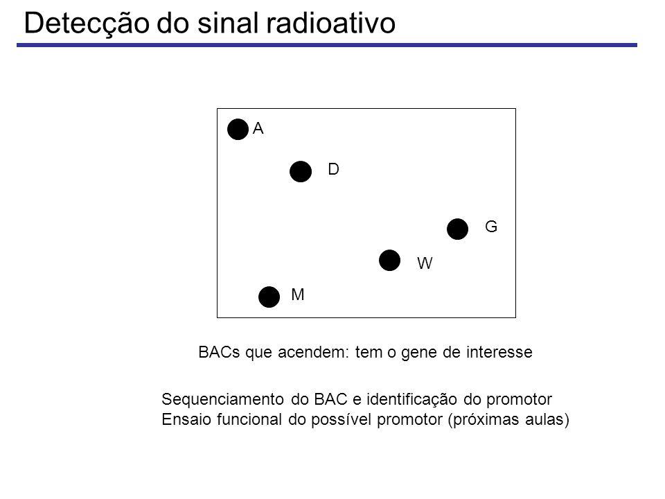 Detecção do sinal radioativo