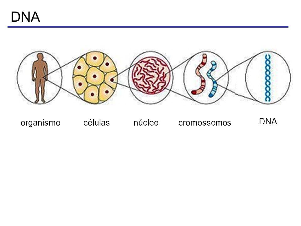 DNA organismo células núcleo cromossomos DNA