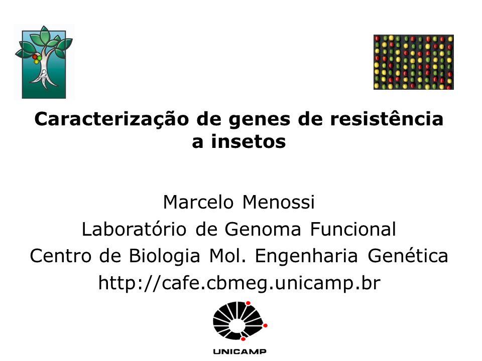 Caracterização de genes de resistência a insetos
