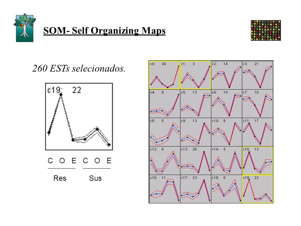 SOM- Self Organizing Maps