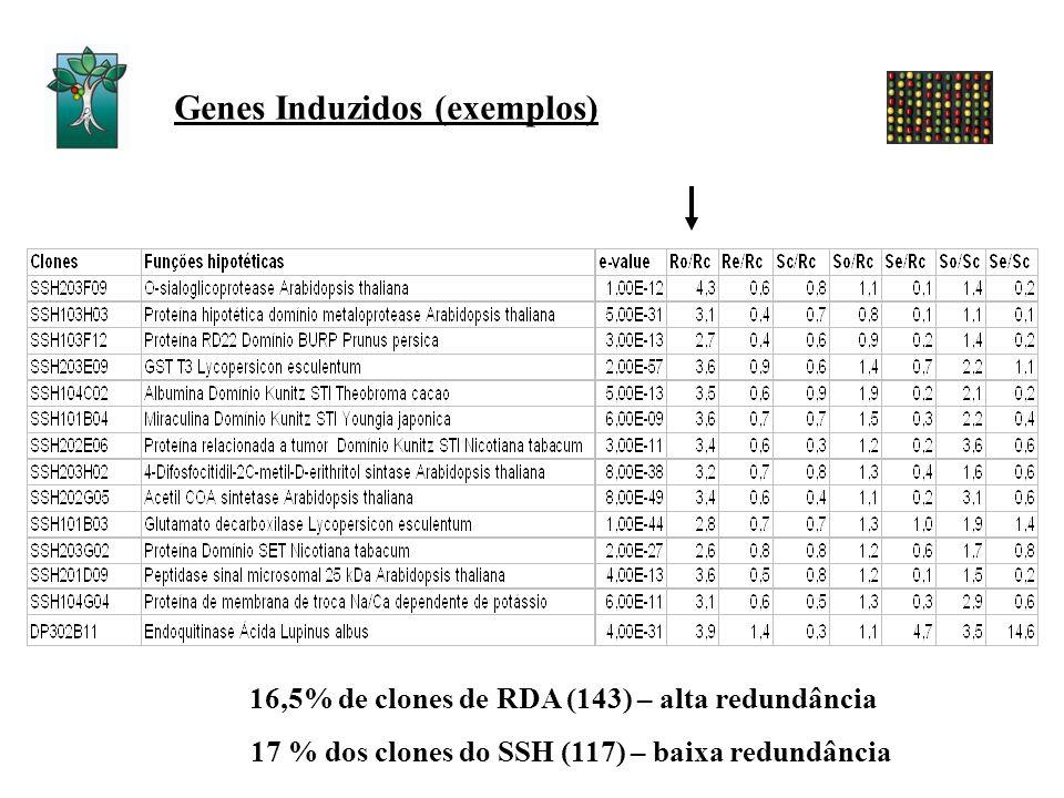 Genes Induzidos (exemplos)