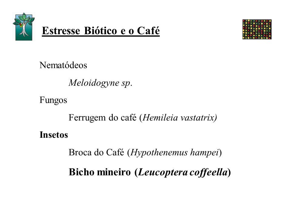 Estresse Biótico e o Café