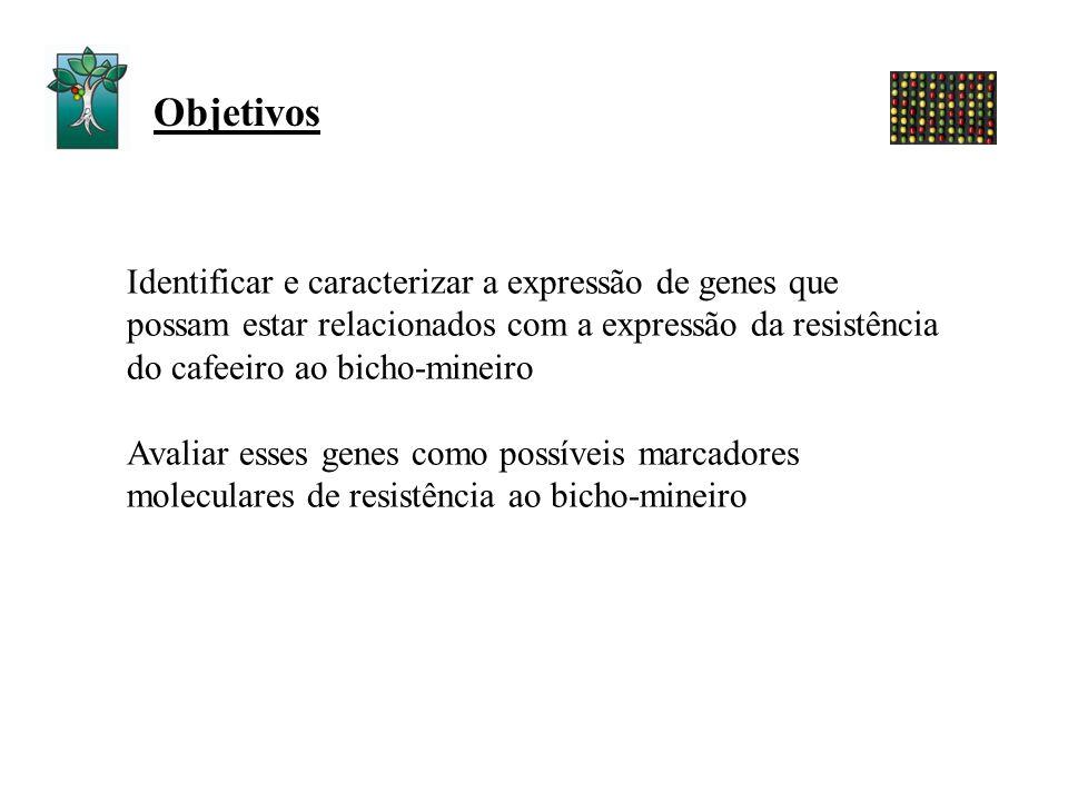 Objetivos Identificar e caracterizar a expressão de genes que possam estar relacionados com a expressão da resistência do cafeeiro ao bicho-mineiro.