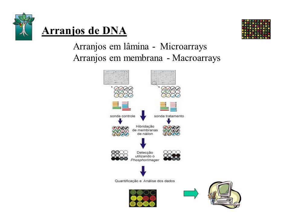 Arranjos de DNA Arranjos em lâmina - Microarrays