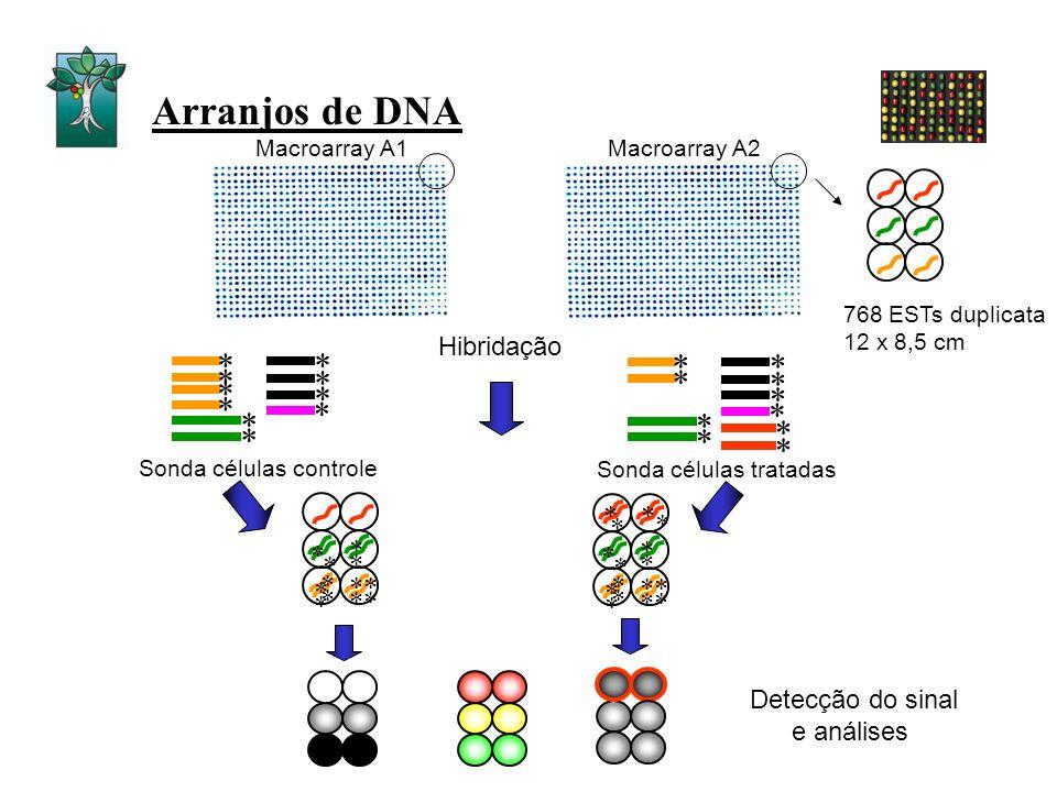 Arranjos de DNA * * * * * * * * * * * * * Hibridação Detecção do sinal