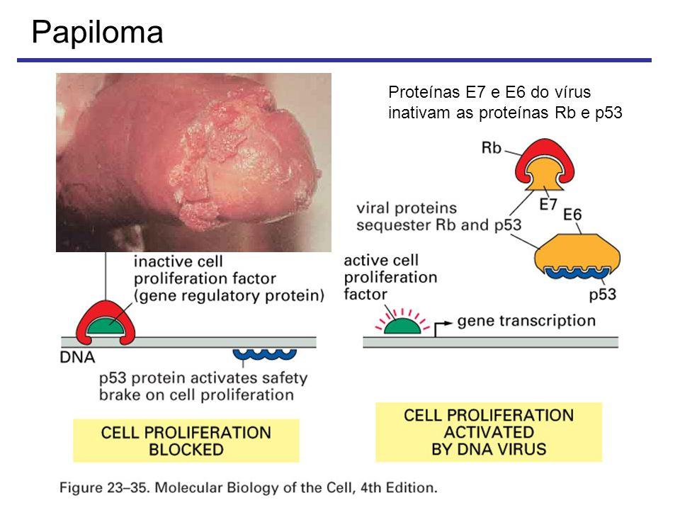 Papiloma Proteínas E7 e E6 do vírus inativam as proteínas Rb e p53
