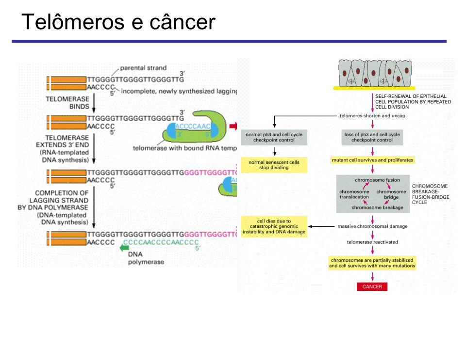 Telômeros e câncer