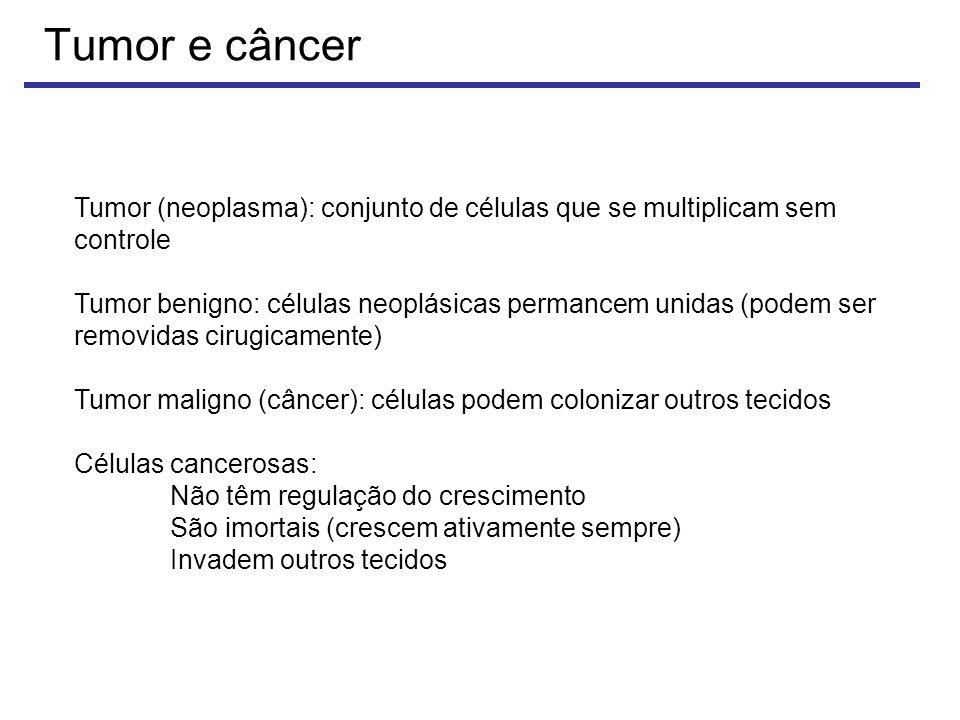 Tumor e câncer Tumor (neoplasma): conjunto de células que se multiplicam sem controle.