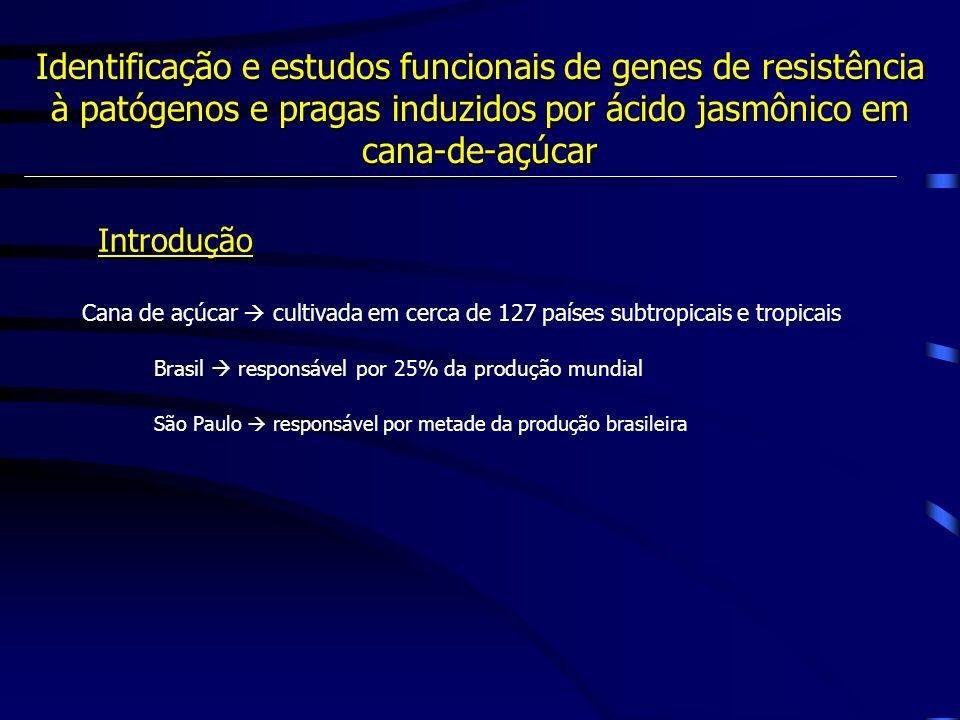 Identificação e estudos funcionais de genes de resistência à patógenos e pragas induzidos por ácido jasmônico em cana-de-açúcar