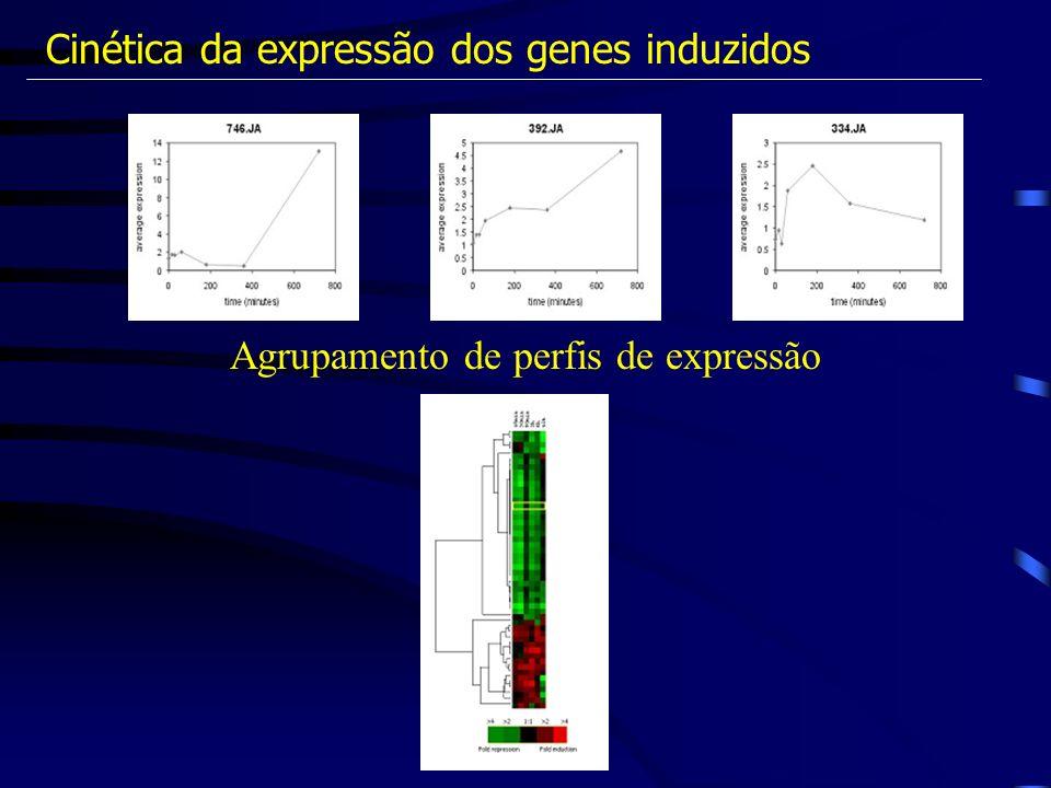 Cinética da expressão dos genes induzidos