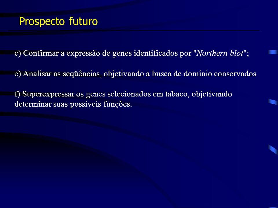 Prospecto futuro c) Confirmar a expressão de genes identificados por Northern blot ;