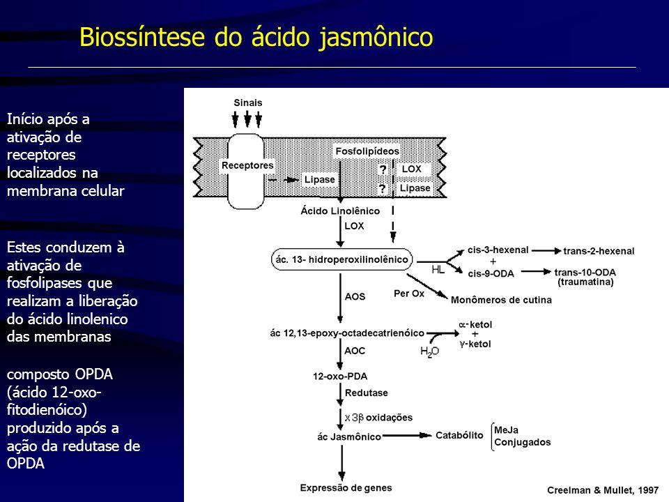 Biossíntese do ácido jasmônico