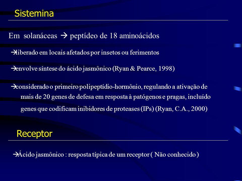 Sistemina Receptor Em solanáceas  peptídeo de 18 aminoácidos