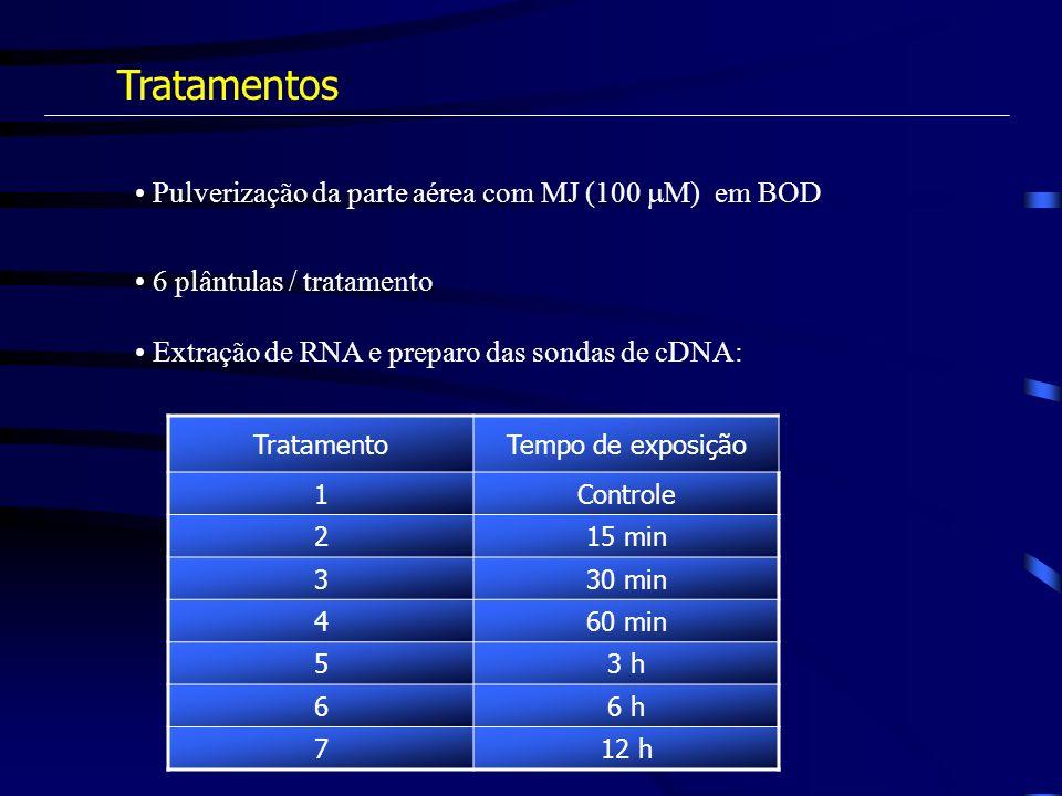 Tratamentos Pulverização da parte aérea com MJ (100 M) em BOD
