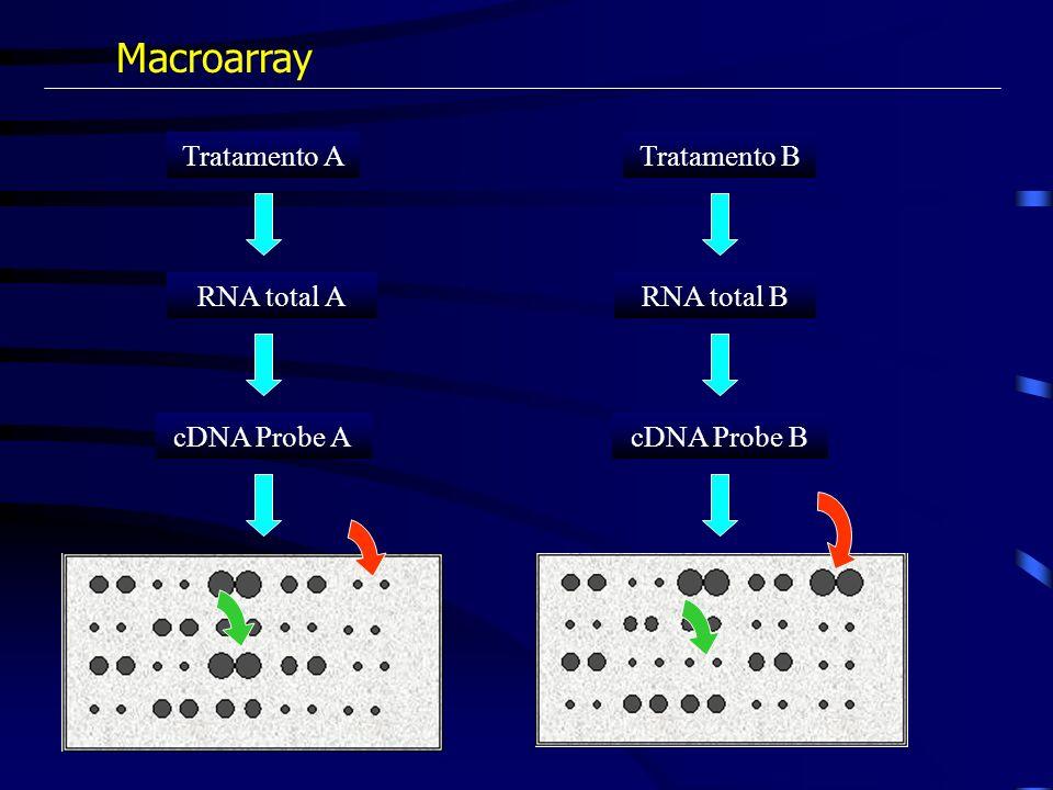 Macroarray Tratamento A Tratamento B RNA total A RNA total B