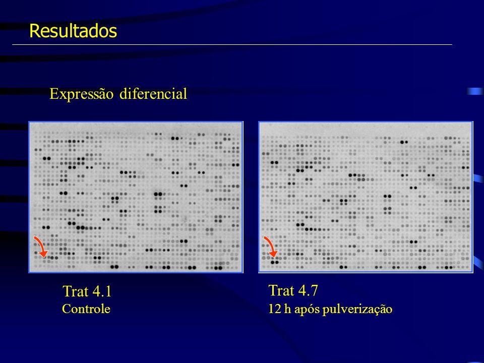 Resultados Expressão diferencial Trat 4.1 Trat 4.7 Controle