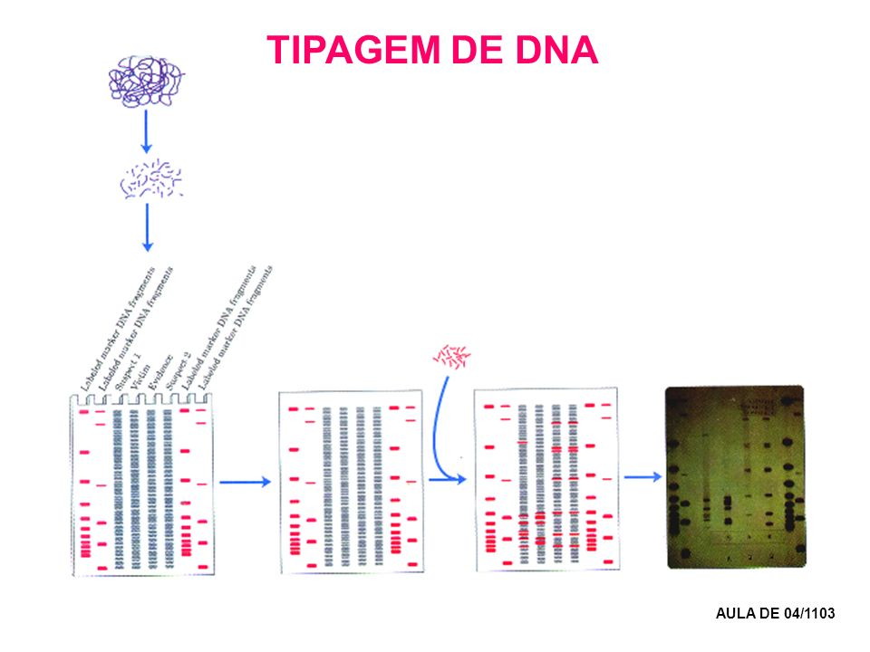 TIPAGEM DE DNA AULA DE 04/1103