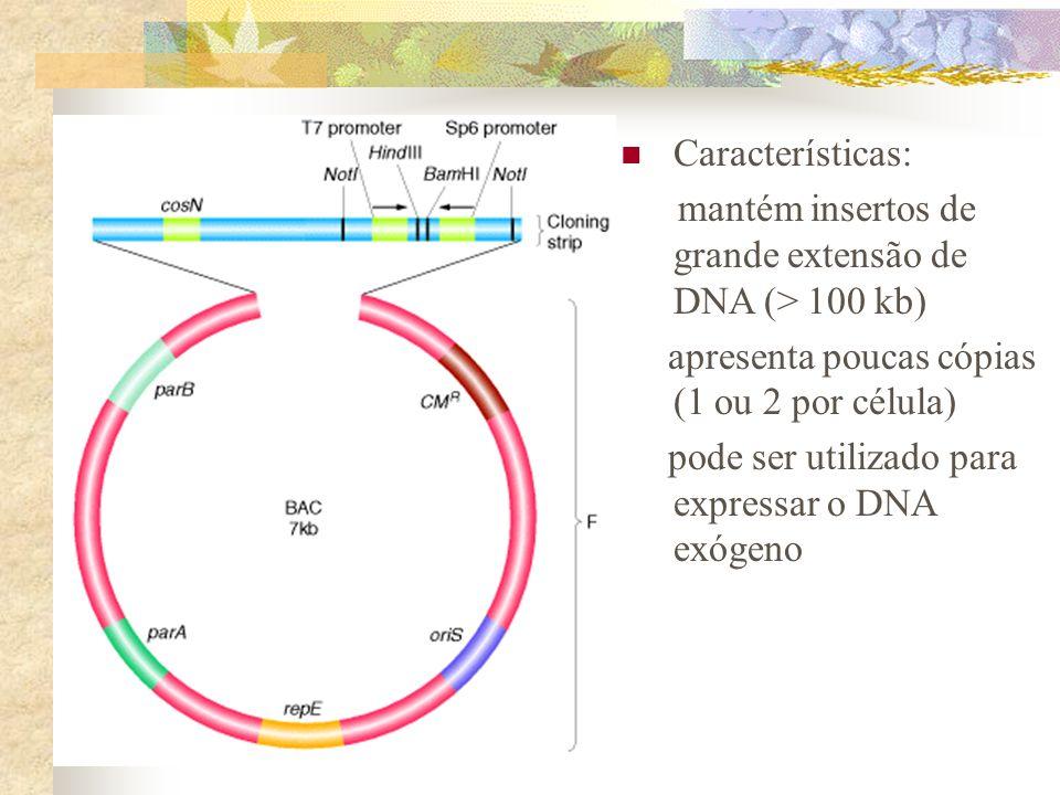 Características: mantém insertos de grande extensão de DNA (> 100 kb) apresenta poucas cópias (1 ou 2 por célula)