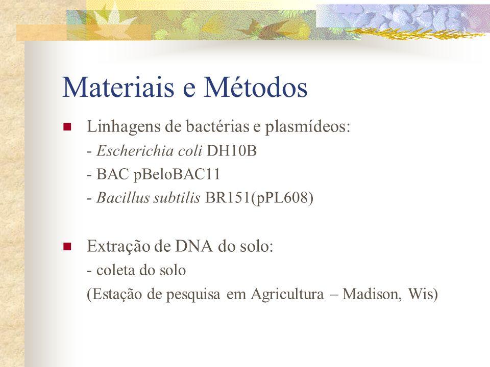 Materiais e Métodos Linhagens de bactérias e plasmídeos: