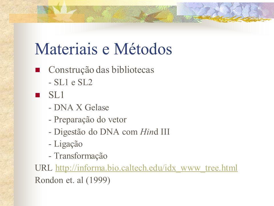 Materiais e Métodos Construção das bibliotecas SL1 - SL1 e SL2