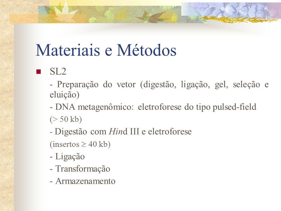 Materiais e Métodos SL2. - Preparação do vetor (digestão, ligação, gel, seleção e eluição) - DNA metagenômico: eletroforese do tipo pulsed-field.