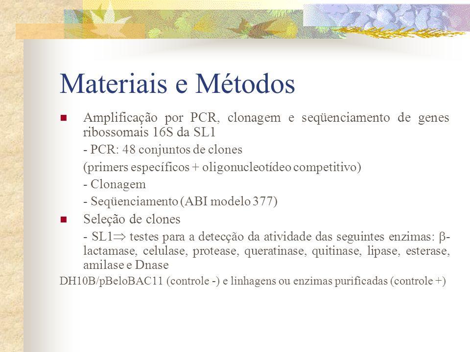 Materiais e Métodos Amplificação por PCR, clonagem e seqüenciamento de genes ribossomais 16S da SL1.