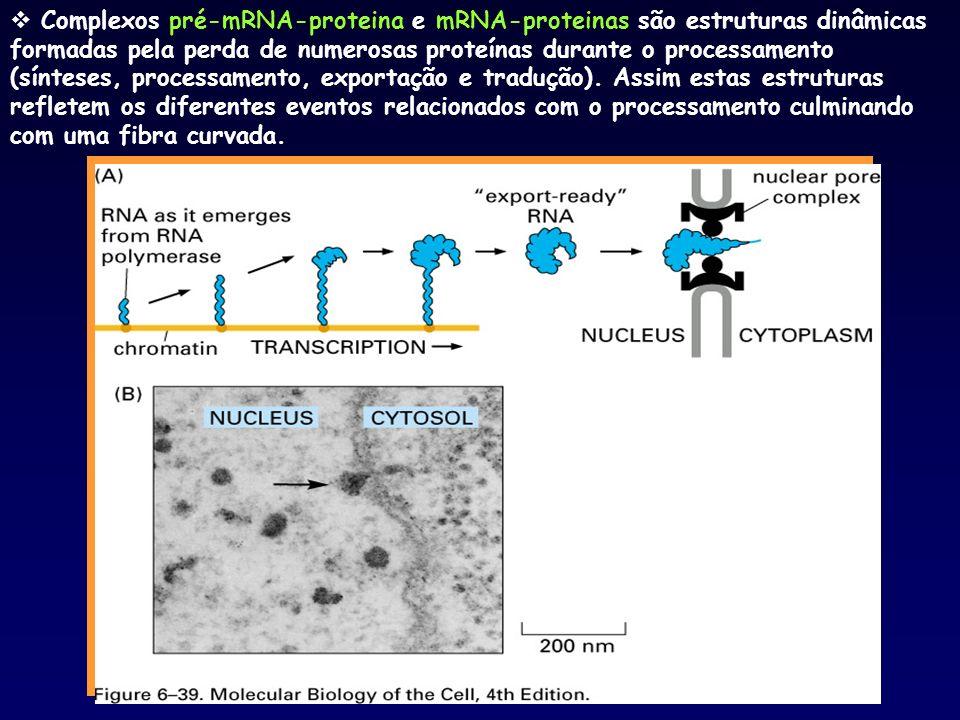 Complexos pré-mRNA-proteina e mRNA-proteinas são estruturas dinâmicas formadas pela perda de numerosas proteínas durante o processamento (sínteses, processamento, exportação e tradução).