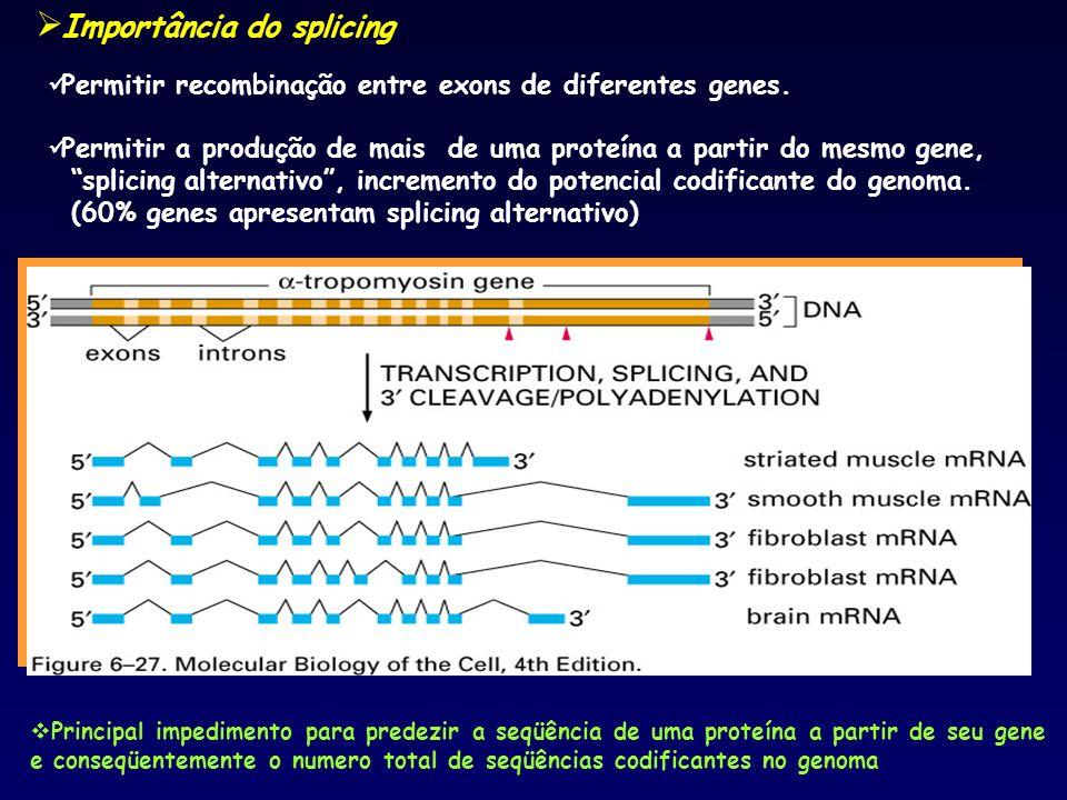 Importância do splicing