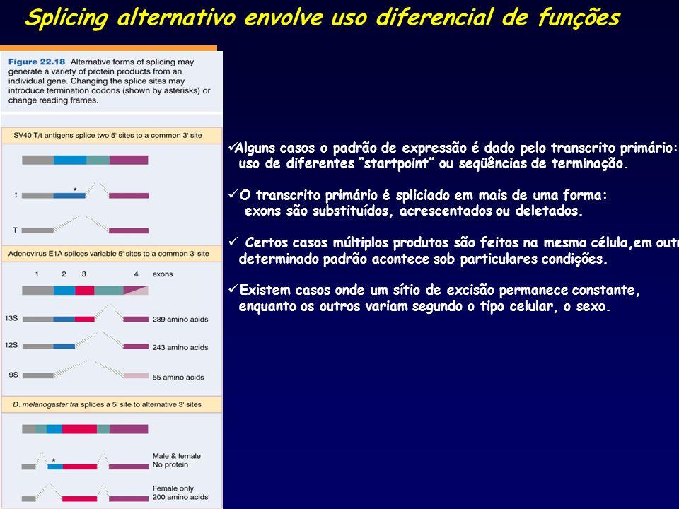 Splicing alternativo envolve uso diferencial de funções