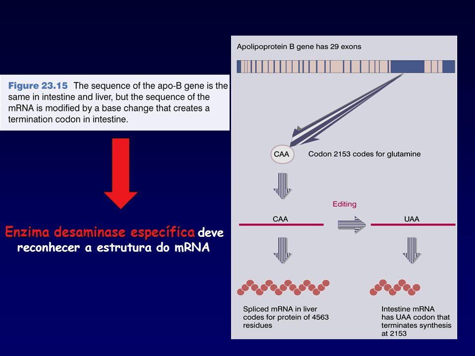 Enzima desaminase específica deve reconhecer a estrutura do mRNA